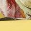 Goldgelb, Mehrfarbig (Weiß, Grün, Rosa)