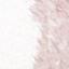 Blady różowy, kremowobiały