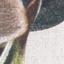 Vorderseite: Beige, CremeweißRückseite: Beige