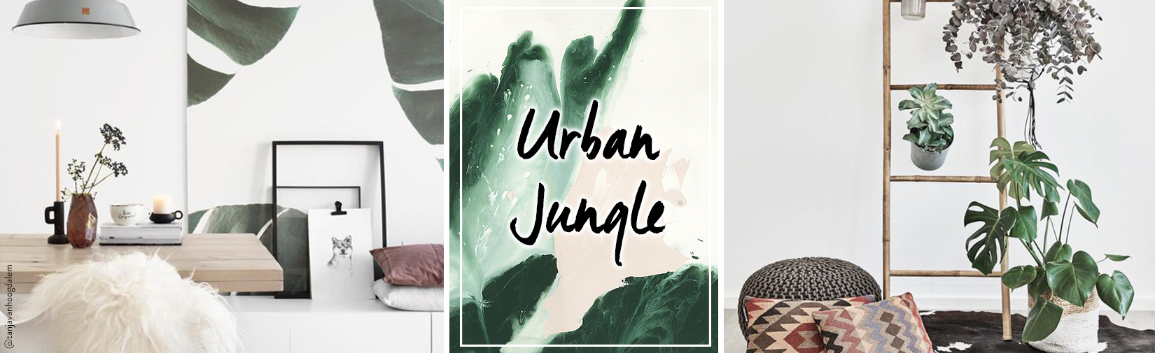 Urban_Jungle-desktop