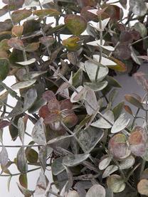 Handgefertigter Eukalyptuskranz Eurelia Adventskranz Festivity Ø 46 cm, Kunststoff, Pudergrün, Ø 46 x H 10 cm