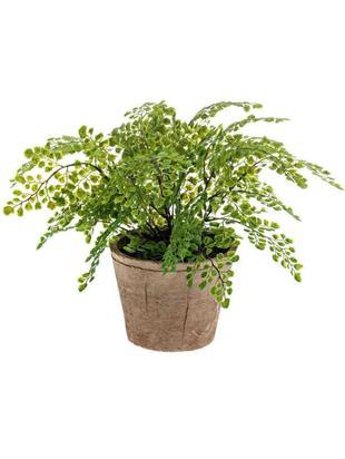 Planta artificial Adiantum, Poliéster, Látex, Polipropileno, Alambre de metal, Verde, Ø 40 x Al 40 cm