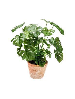 Planta artificial Monstera, Verde, Ø 16 x Al 70 cm