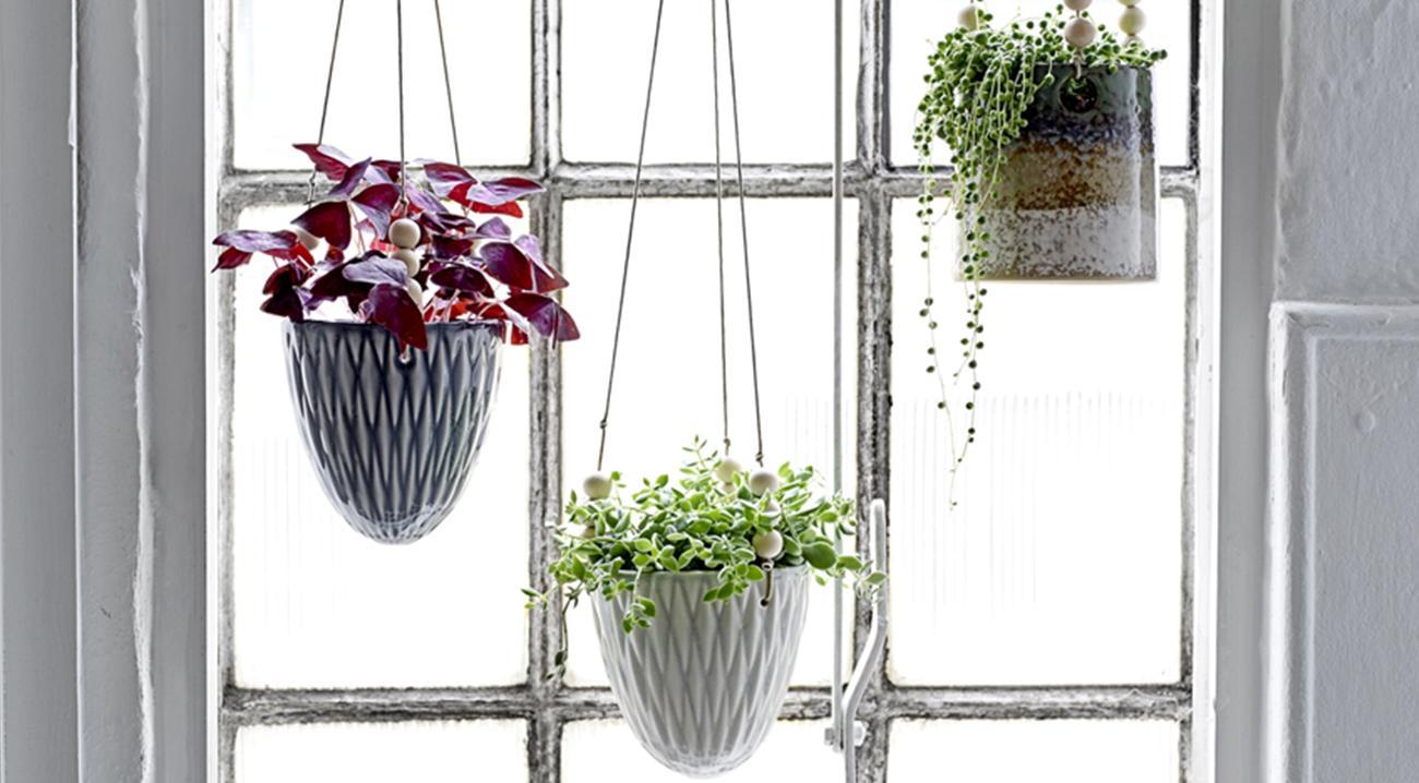 Graue, Weiße Übertöpfe und Blumenampeln hängend