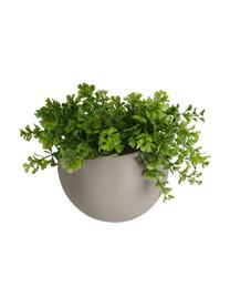 Kleine wandplantenpot Globe van keramiek, Keramiek, Beige, Ø 15 x H 10 cm