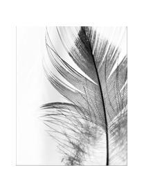 Zarámovaný digitální tisk Feather, Obraz: černá, bílá Rám: černá