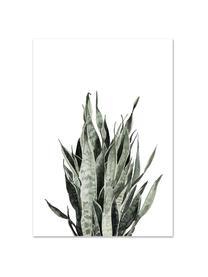 Plakat Sanseviera, Druk cyfrowy na papierze, 200 g/m², Biały, blady różowy, zielony, S 21 x W 30 cm