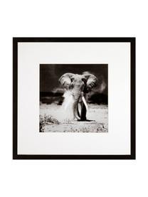 Impression numérique encadrée Elephant, Noir, blanc