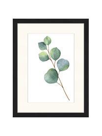Gerahmter Digitaldruck Eucalyptus II, Bild: Digitaldruck auf Papier, , Rahmen: Holz, lackiert, Front: Plexiglas, Bild: Grün, Weiß Rahmen: Schwarz, 33 x 43 cm