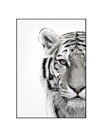 Zarámovaný digitální tisk White Tiger, Černá, bílá