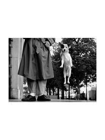Bildband Dogs, Papier, Mehrfarbig, 14 x 19 cm