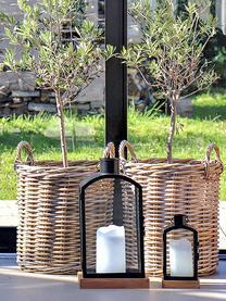Set 2 cesti per piante in rattan Indo, Marrone, Set in varie misure