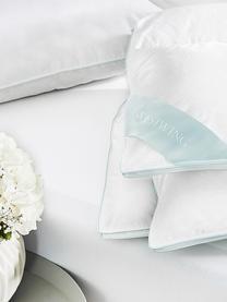 Daunen-Kopfkissen Premium, mittel, Hülle: 100% Baumwolle, Mako-Fein, Weiß mit türkiser Satinbiese, 40 x 80 cm