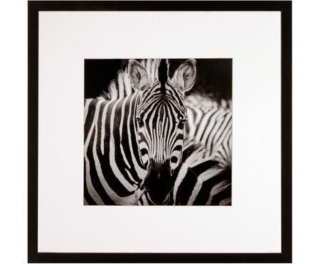 Fotografía enmarcada Zebra