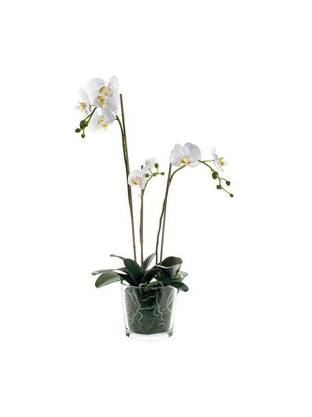 Planta artificial Orquídea, Poliéster, Látex, Polipropileno, Alambre de metal, Blanco, Ø 23 x Al 70 cm