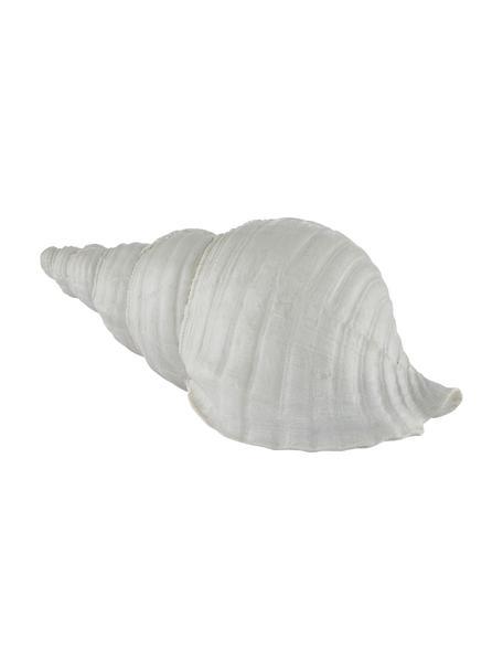Deko-Objekt Serafina Shell, Kunststoff, Weiß, 24 x 10 cm