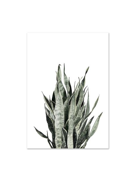 Poster Sanseviera, Digitale print op papier, 200 g/m², Wit, roze, groen, 21 x 30 cm