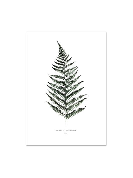 Poster Fern, Stampa digitale su carta, 200 g/m², Bianco, verde, Larg. 21 x Alt. 30 cm