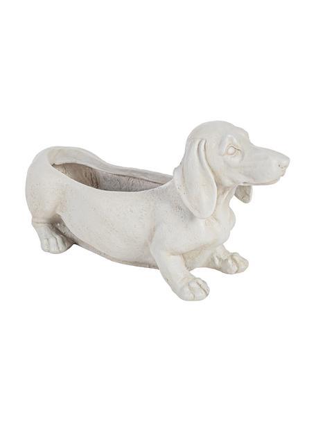 XL Übertopf Dog aus Beton, Beton, beschichtet, Gebrochenes Weiß, 50 x 27 cm