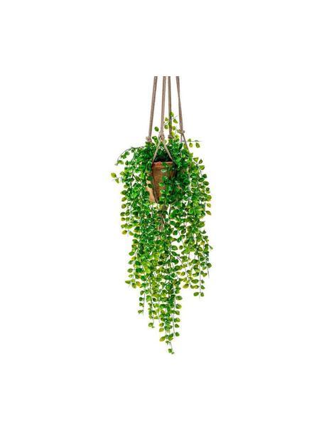 Planta artificial Ficus, Poliéster, Látex, Polipropileno, Alambre de metal, Verde, Ø 20 x Al 80 cm