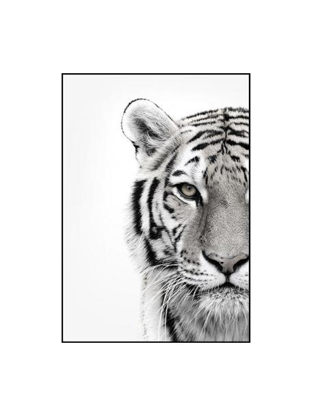 Gerahmter Digitaldruck White Tiger, Bild: Digitaldruck auf Papier (, Rahmen: Hochdichte Holzfaserplatt, Schwarz, Weiss, 50 x 70 cm