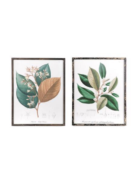 Set de cuadros Barbaflower, 2pzas., Multicolor, An 42 x Al 54 cm