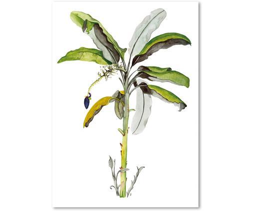 Poster Banana Tree, Stampa digitale su carta, 200 g/m², Verde, bianco, Larg. 21 x Alt. 30 cm