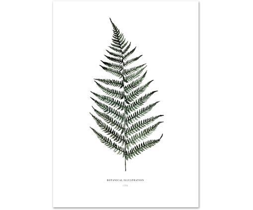Poster Fern, Blanc, vert