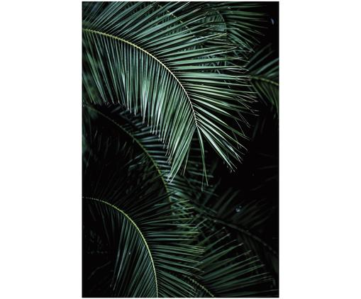 Fototapeta Palms, Czarny, zielony