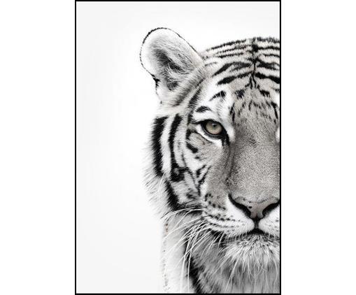 Stampa digitale incorniciata White Tiger, Immagine: stampa digitale su carta , Cornice: Pannello di fibra ad alta, Nero, bianco, Larg. 50 x Alt. 70 cm
