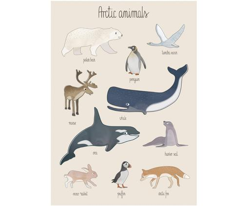 Poster Arctic Animals, Multicolore