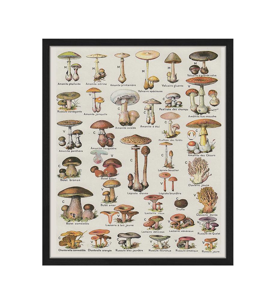 Gerahmter Digitaldruck Mushroom Vintage Poster, Bild: Digitaldruck auf Papier, , Rahmen: Holz, lackiert, Front: Plexiglas, Mehrfarbig, 53 x 63 cm