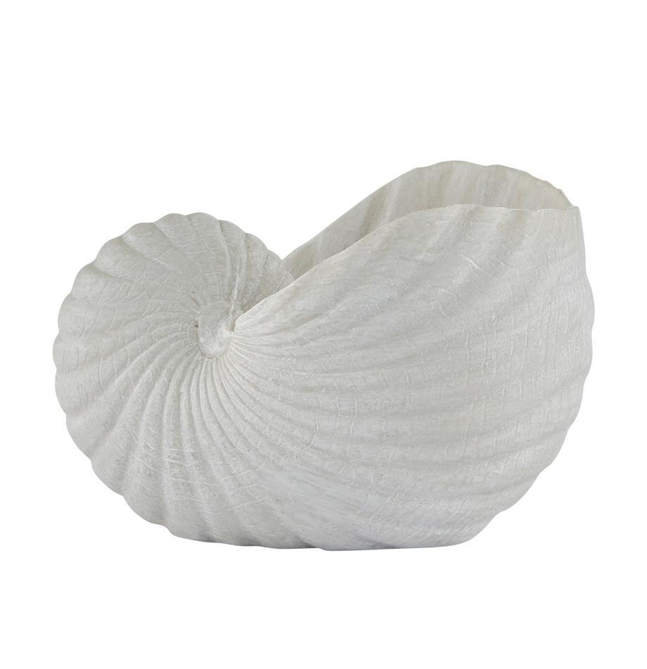 Oggetto decorativo Serafina Shell, Materiale sintetico, Bianco, Larg. 12 x Alt. 8 cm