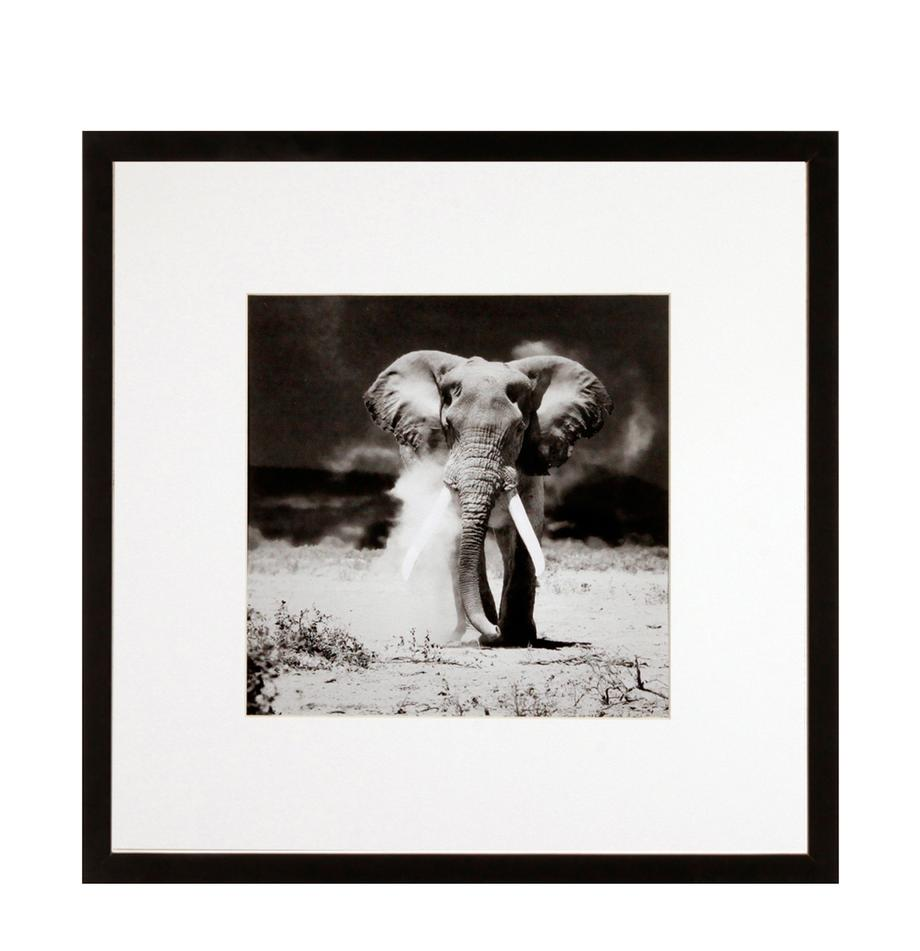 Impresión digital enmarcada Elephant, Negro, blanco, An 40 x Al 40 cm