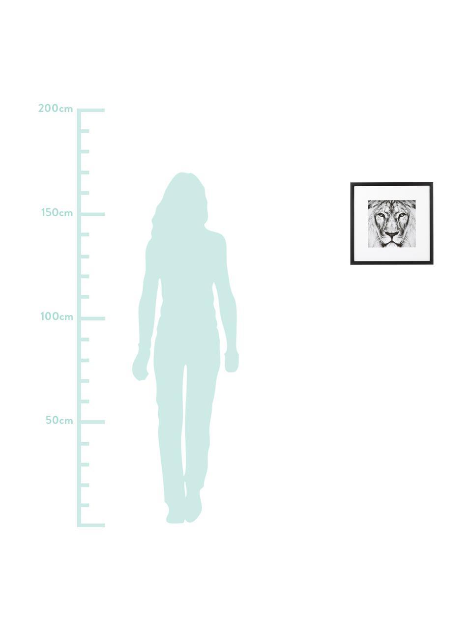 Impression numérique encadrée Lion Close Up, Noir, blanc