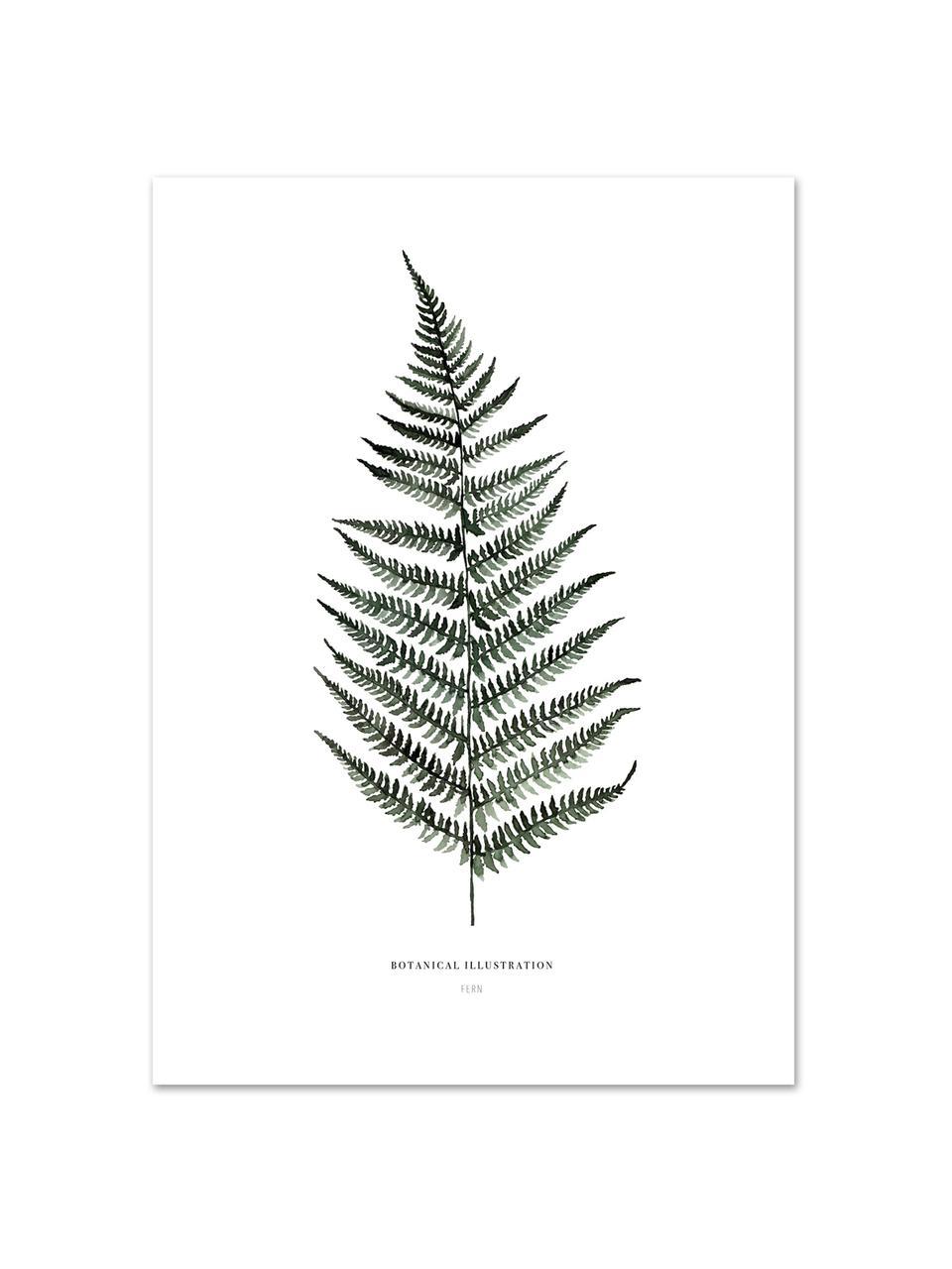 Plakat Fern, Druk cyfrowy na papierze, 200 g/m², Biały, zielony, S 21 x W 30 cm