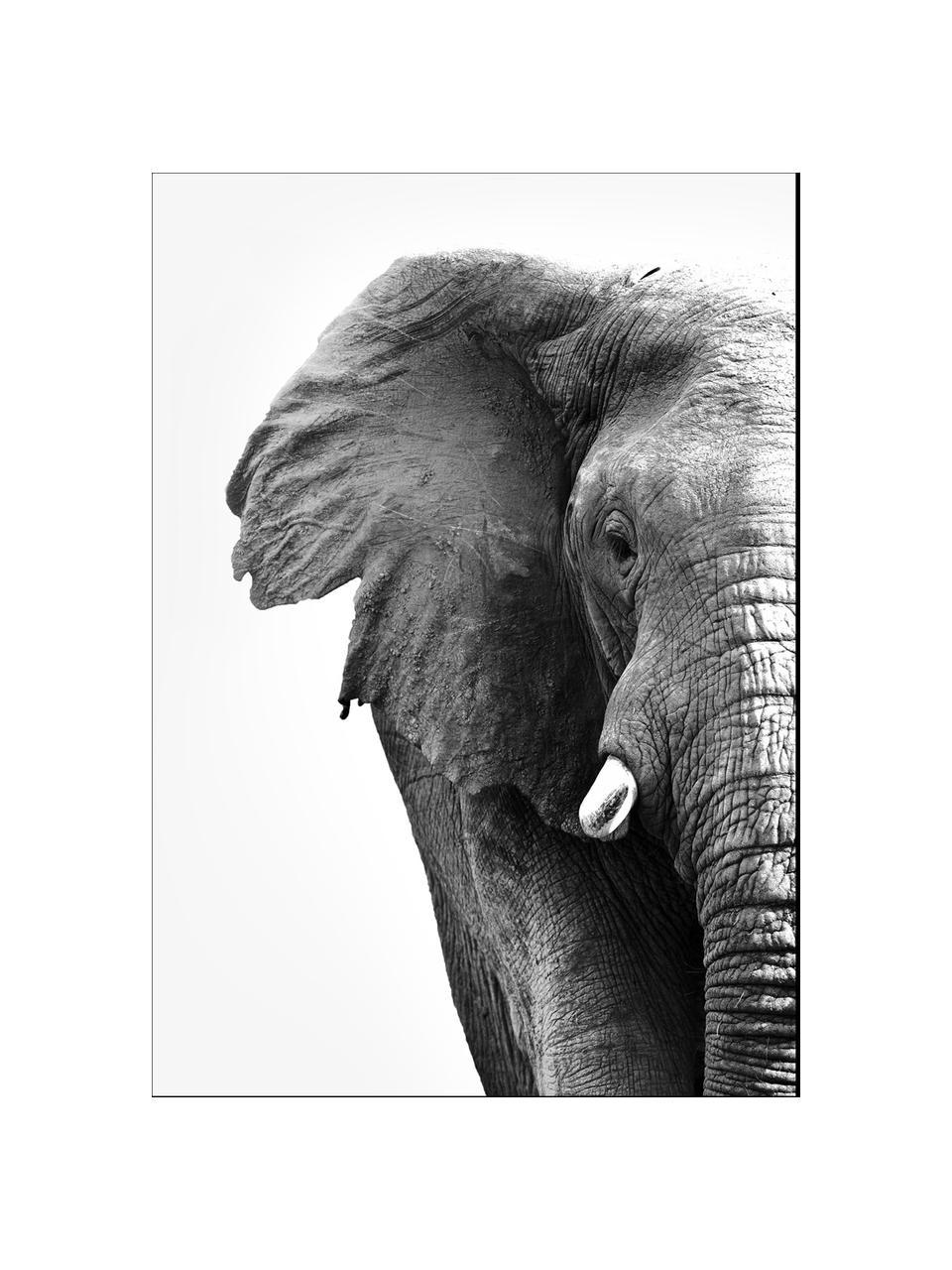 Impression numérique encadrée White Elephant, Noir, blanc