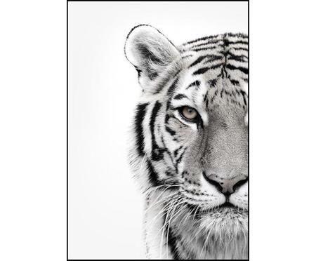 Zarámovaný digitální tisk White Tiger