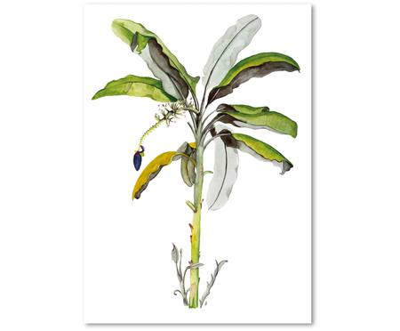 Poster Banana Tree