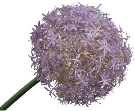 Fiore artificiale porro Livia