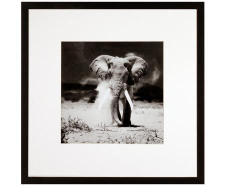 Stampa digitale incorniciata Elephant