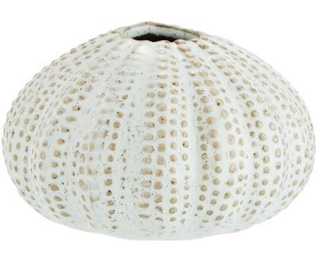 Vaso Sea Urchins