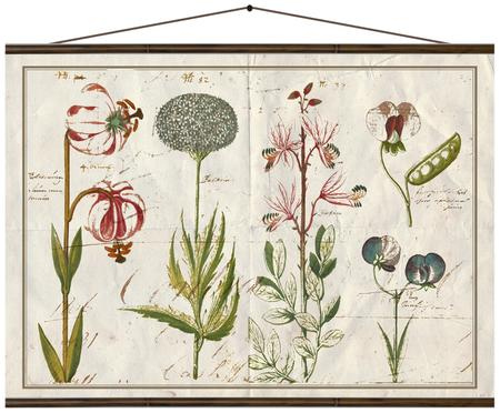 Stampa digitale su tela Flora