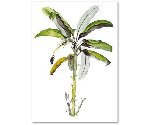 Plakat Banana Tree, Zielony, biały