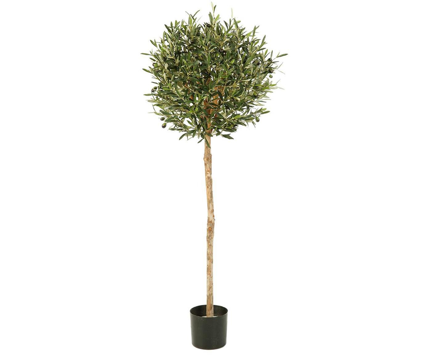 Planta artificial Olivo, Poliéster, tronco de materiales naturales, Verde, Ø 45 x Al 130 cm