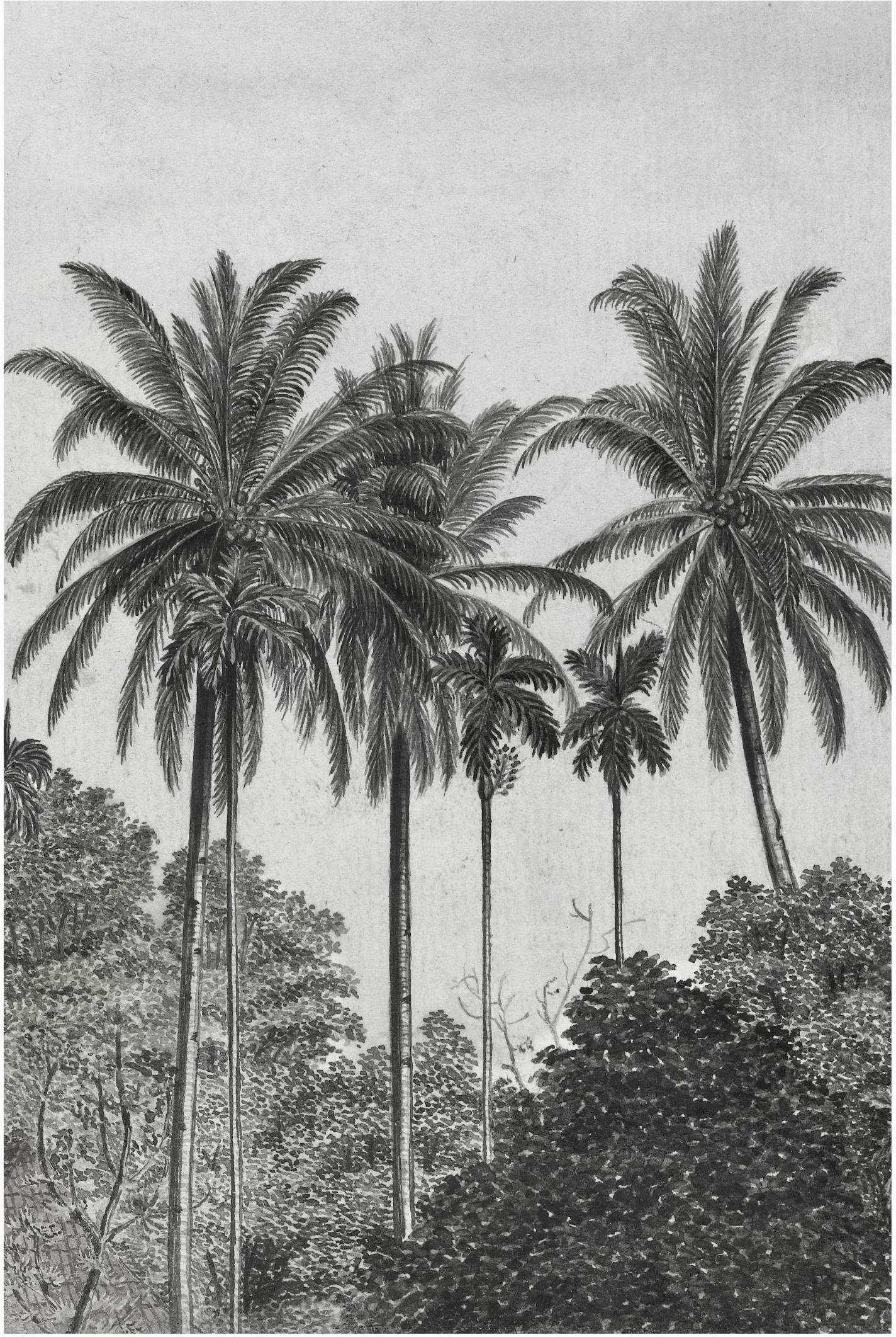 Carta da parati Palms, Tessuto non tessuto, Grigio, nero, bianco, Larg. 200 x Alt. 300 cm