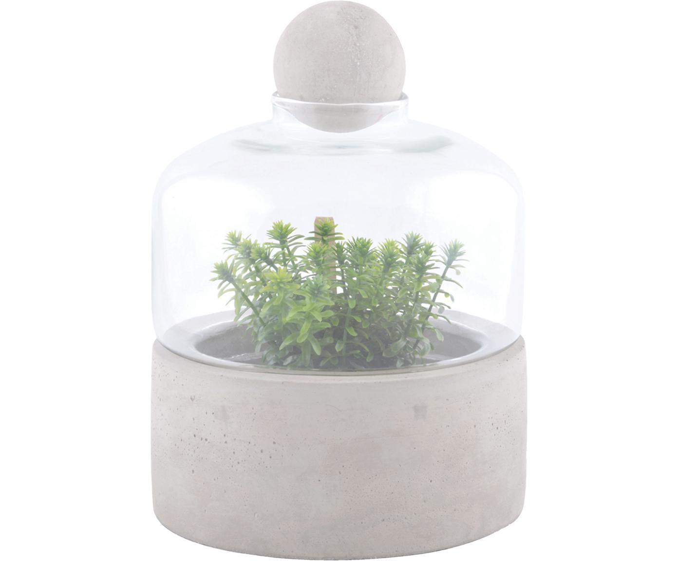 Butelka na rośliny Budi, Szary, transparentny, Ø 18 x W 24 cm