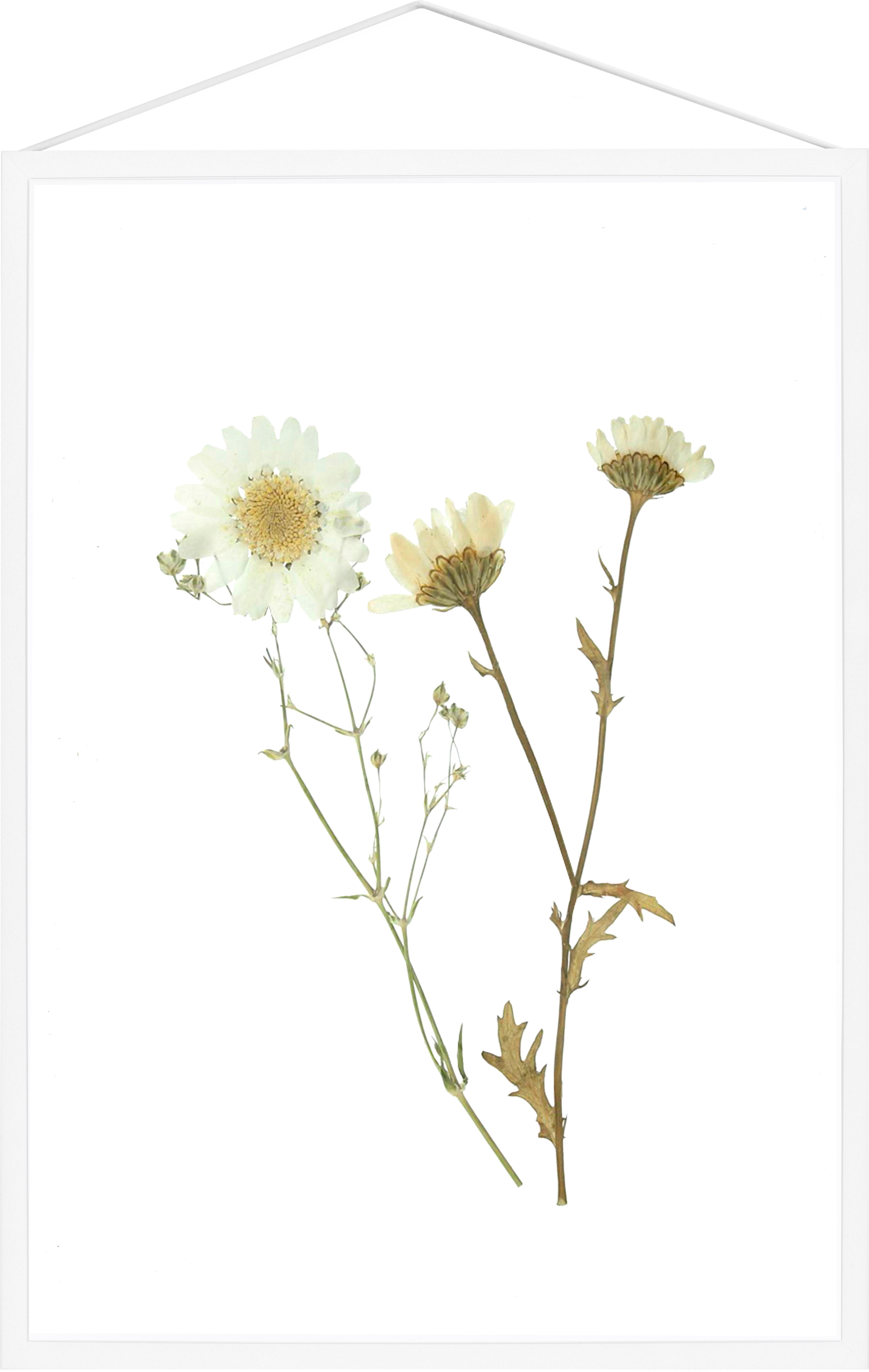 Ramka na zdjęcia Frame, Stelaż: aluminium malowane proszk, Stelaż: biały Zawieszka: czarny Front i tył: transparentny, S 32 x W 44 cm