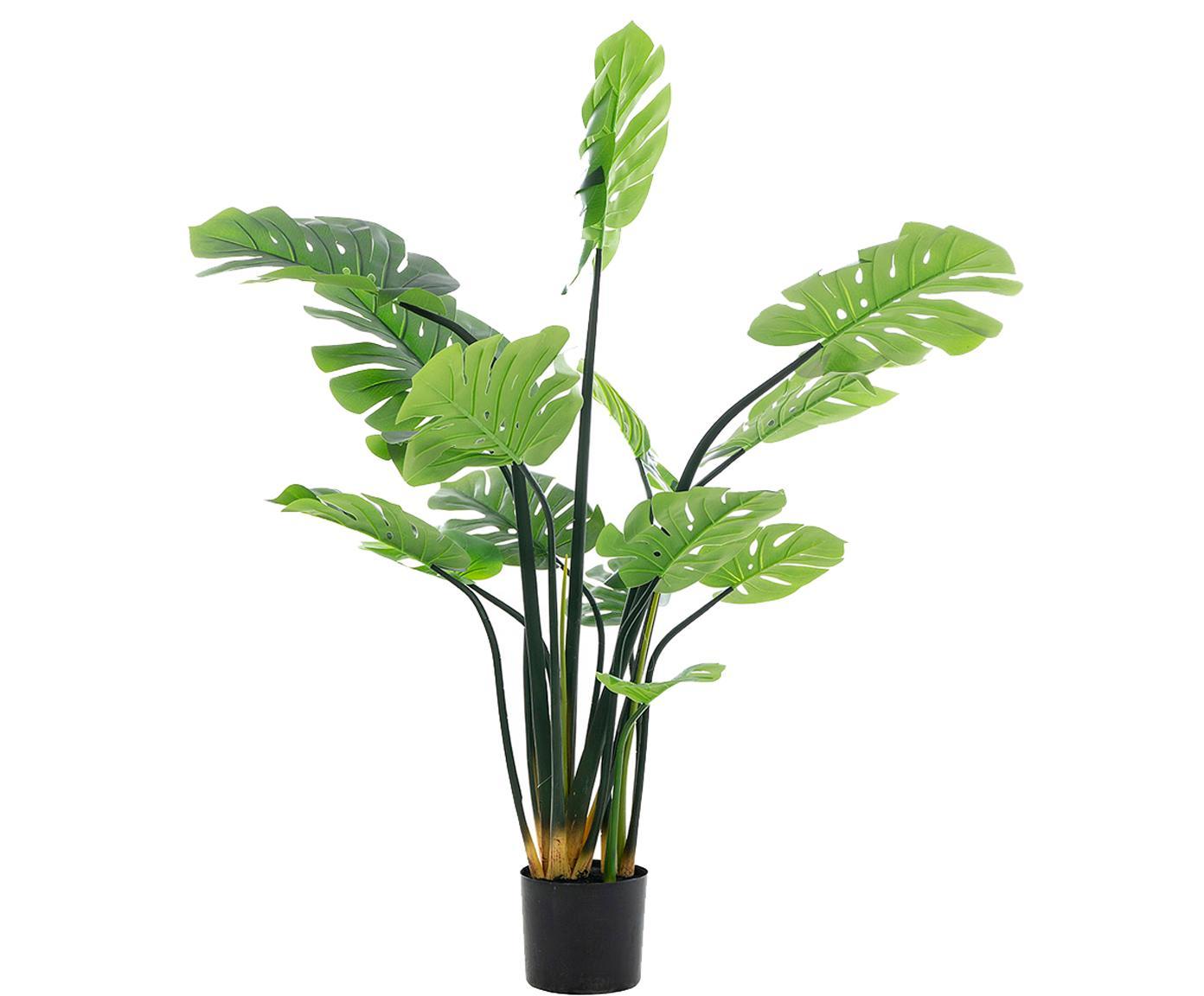 Planta artificial Minto, Fibra sintética, Verde, negro, Ø 112 x Al 150 cm