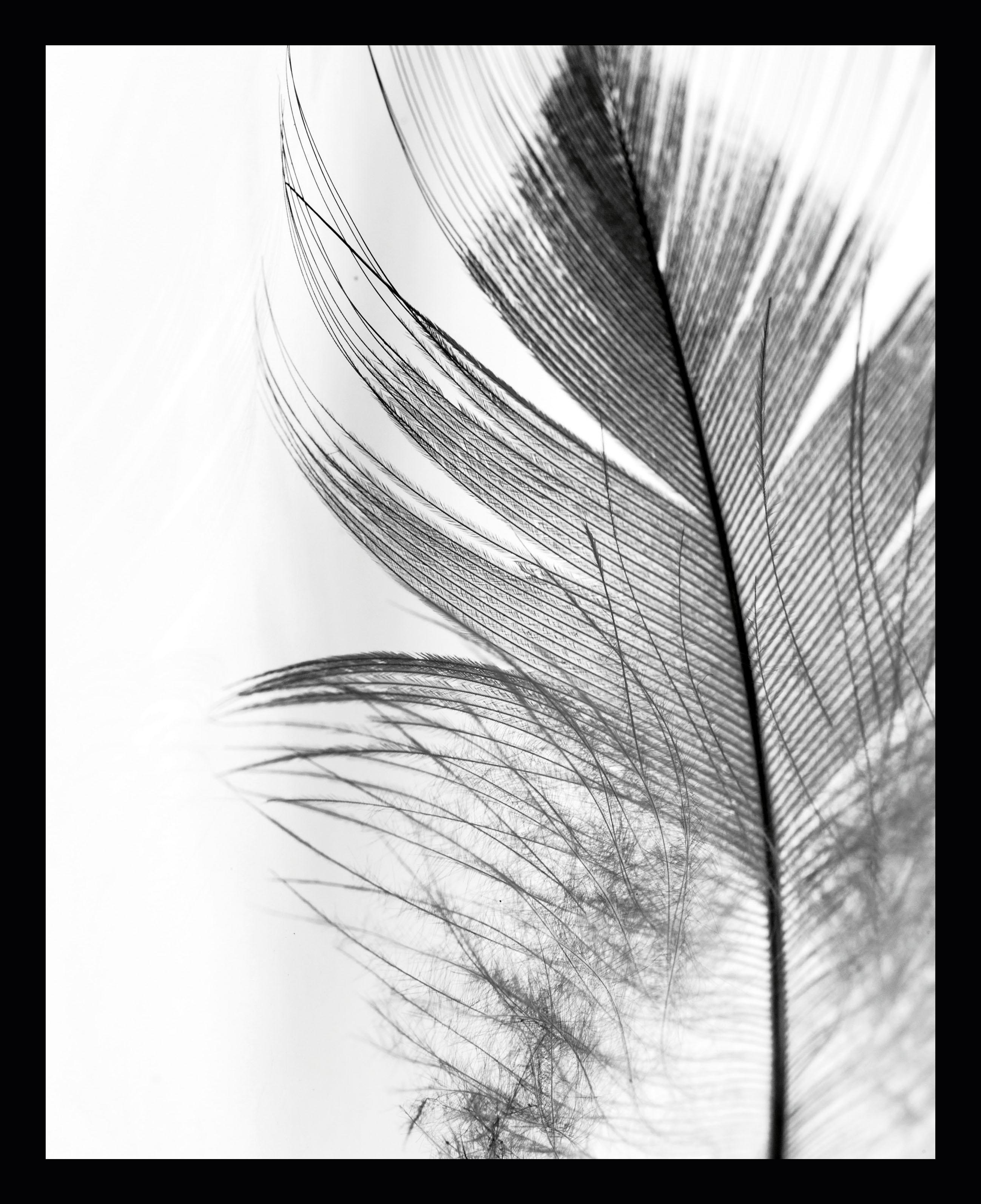 Gerahmter Digitaldruck Feather, Bild: Digitaldruck auf Papier, Rahmen: Kunststoff (PU), Front: Glas, Rückseite: Mitteldichte Faserplatte , Bild: Schwarz, WeissRahmen: Schwarz, 30 x 40 cm